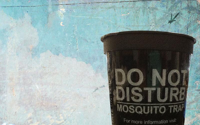 backyard_mosquito